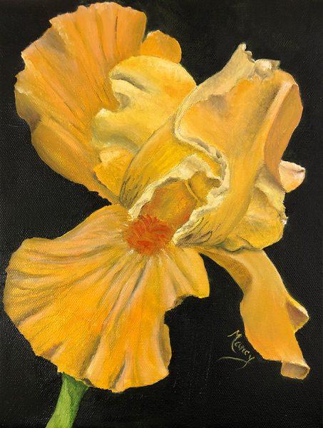 Yellow-Iris-Web